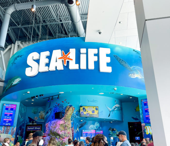 Exploring An Underwater World At SEA LIFE Orlando